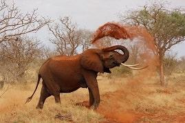 Africam, ver elefantes en tiempo real